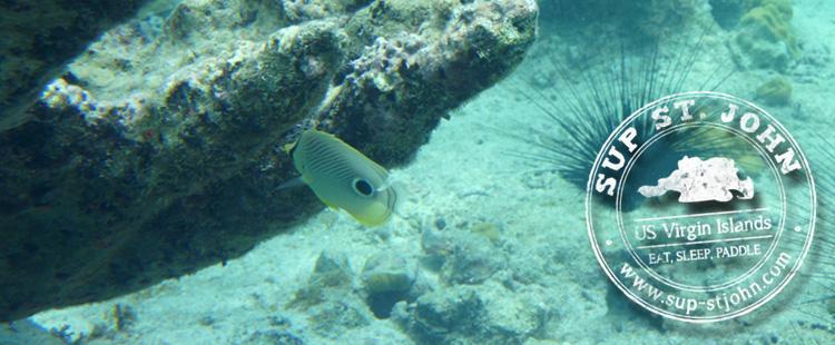 snorkeling-hawksnest-stjohn-usvi