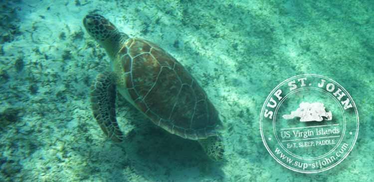 sup stjohn paddleboard lesson rental sea turtles
